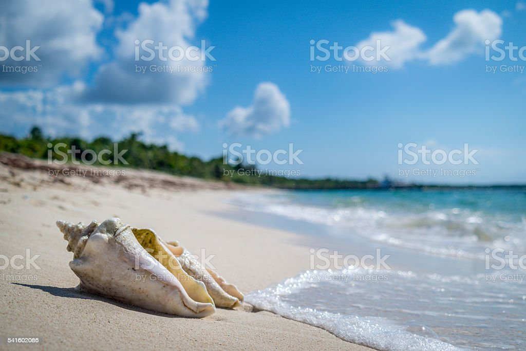 Shell resting on the beach stock photo