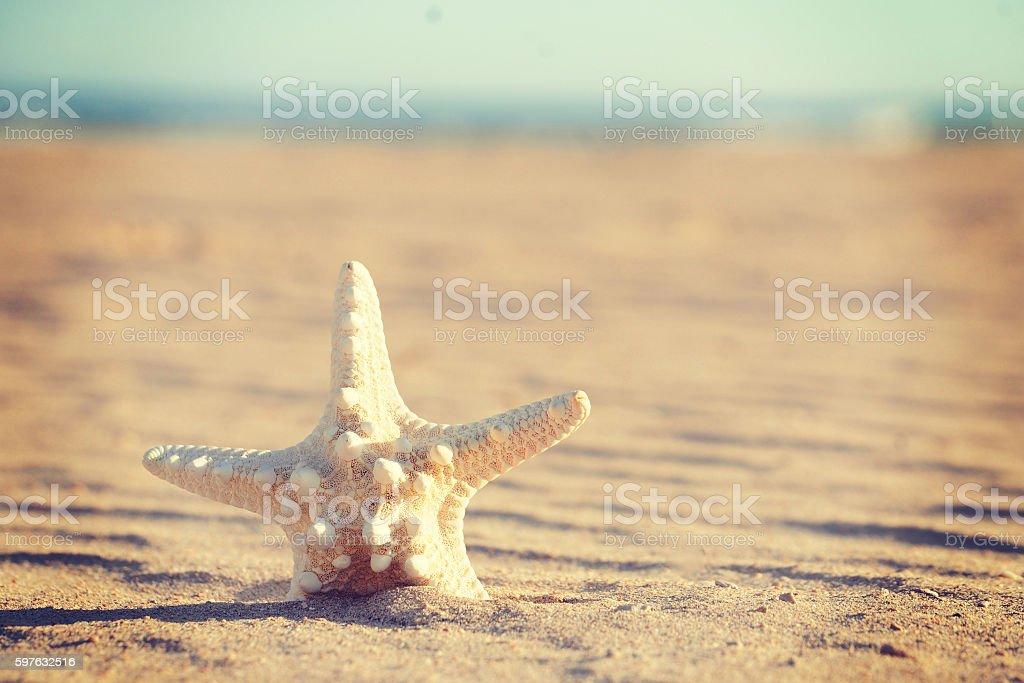 Shell Sea Star stock photo