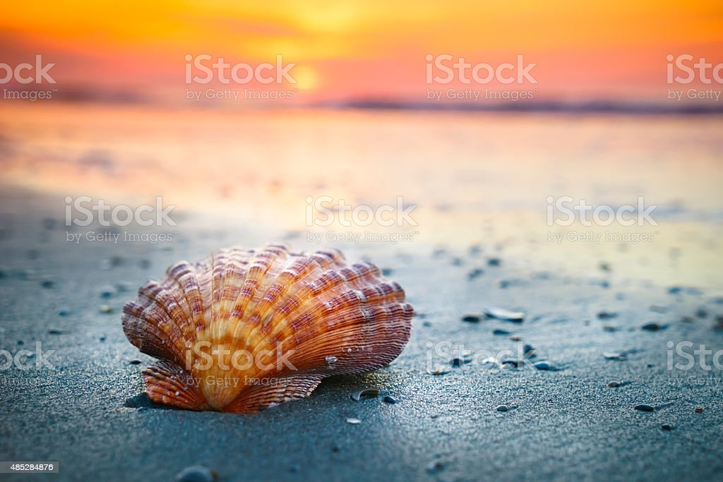 Shell, sunrise and ocean waves stock photo
