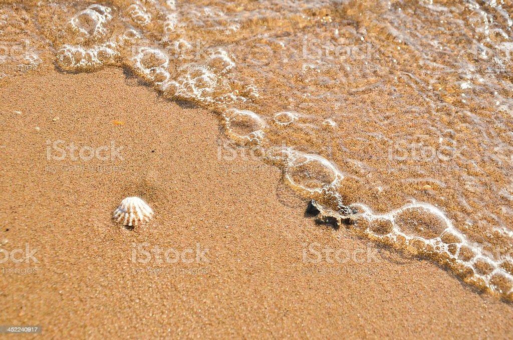 shell surf royalty-free stock photo