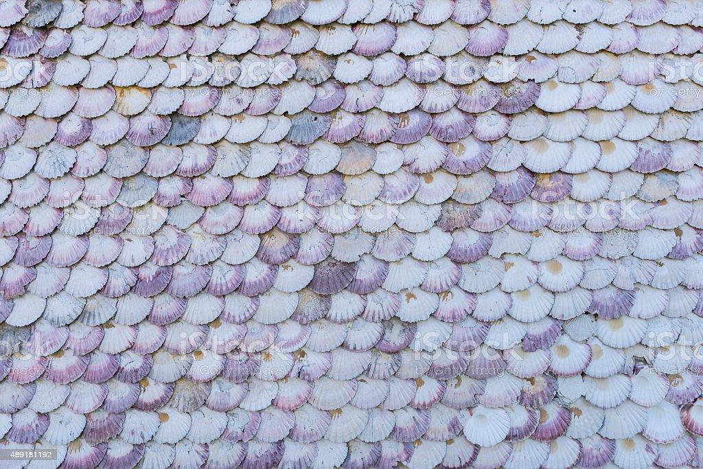Shell texture. stock photo