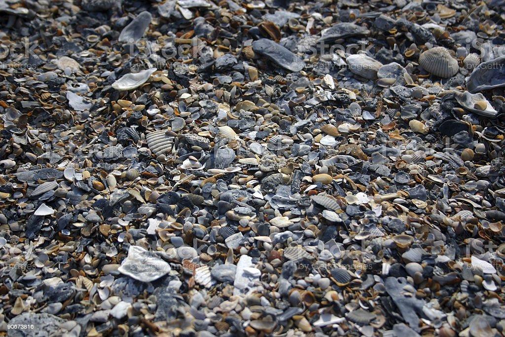 shell texture (IV) stock photo