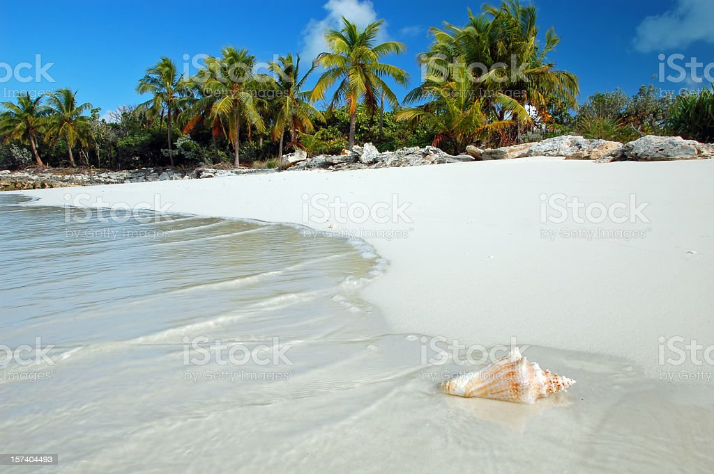 Shell washes up on tropical beach stock photo