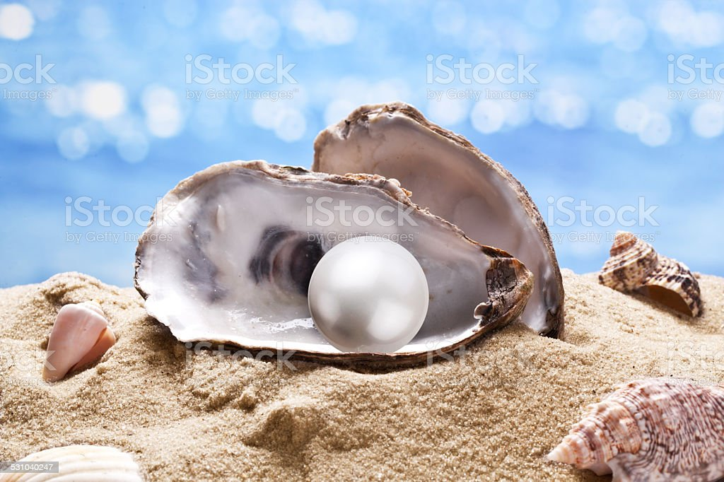 Shell with a pearl. stock photo