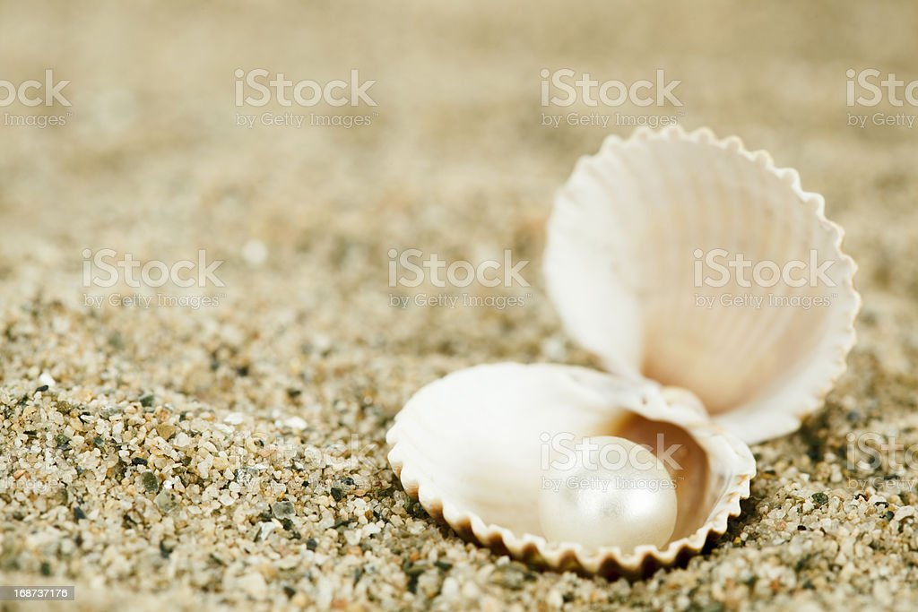 shell with pearl stock photo