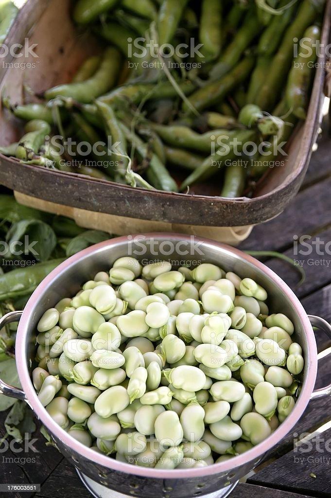 Shelled Fava Beans royalty-free stock photo
