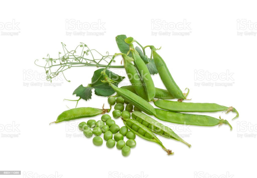Shelled green peas, several pods and pea branch stock photo