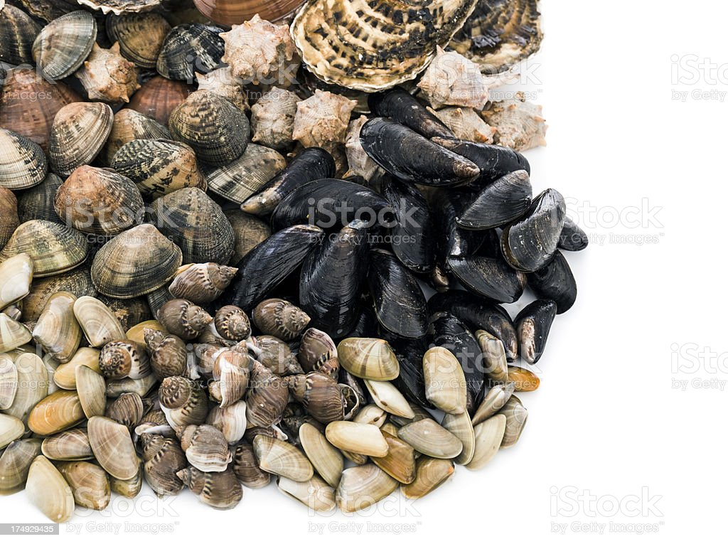 Shellfish assortment royalty-free stock photo