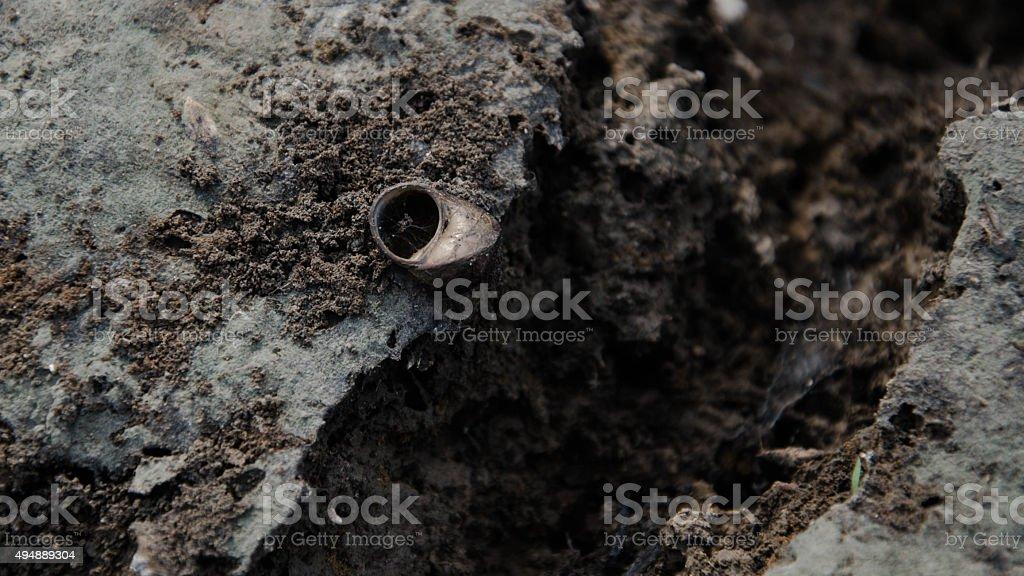 La cría de moluscos en seco tierra. foto de stock libre de derechos