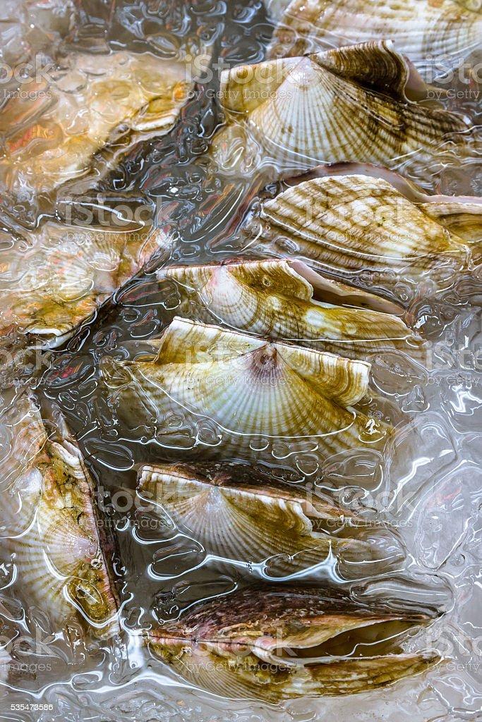 Shellfish in Icy Water stock photo