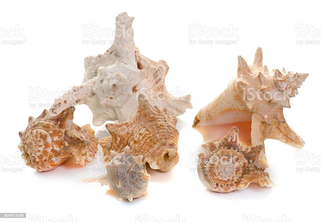shellfish in studio stock photo