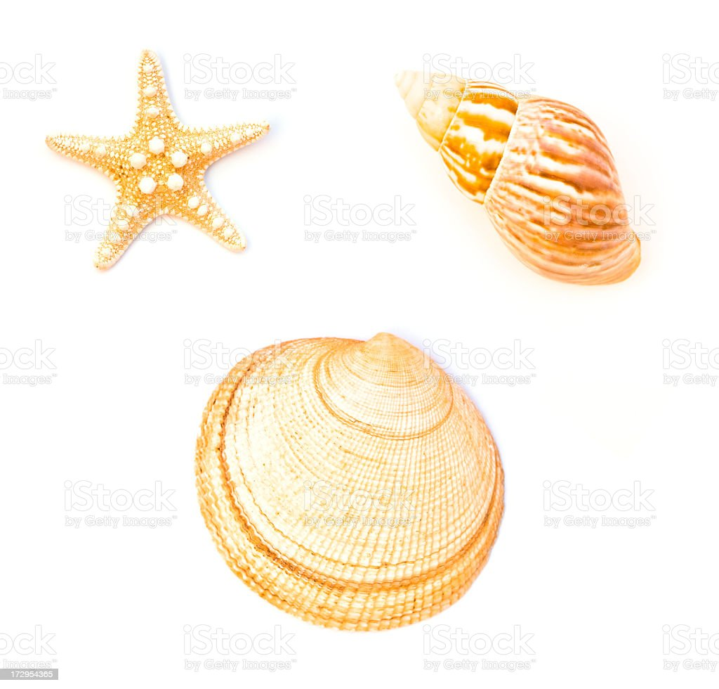 Shell-fish royalty-free stock photo