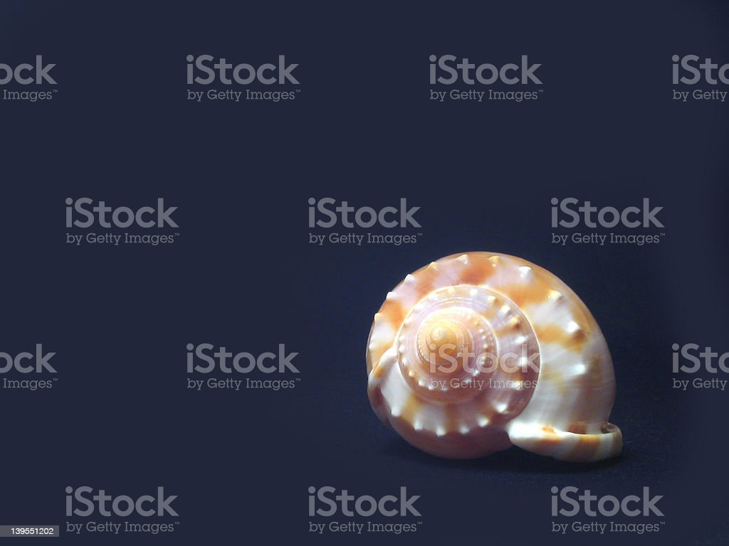 shell-isolated royalty-free stock photo