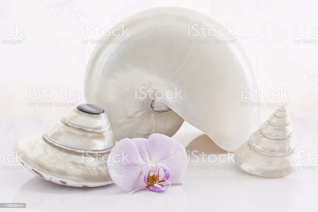 Shells and orquid. royalty-free stock photo