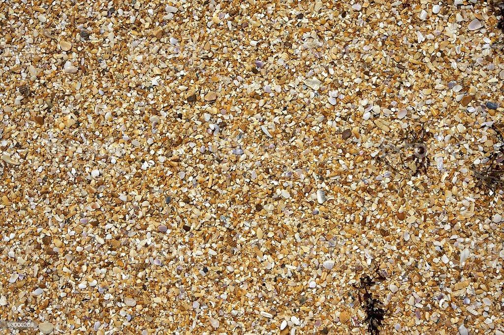 Shells and Seaweed stock photo