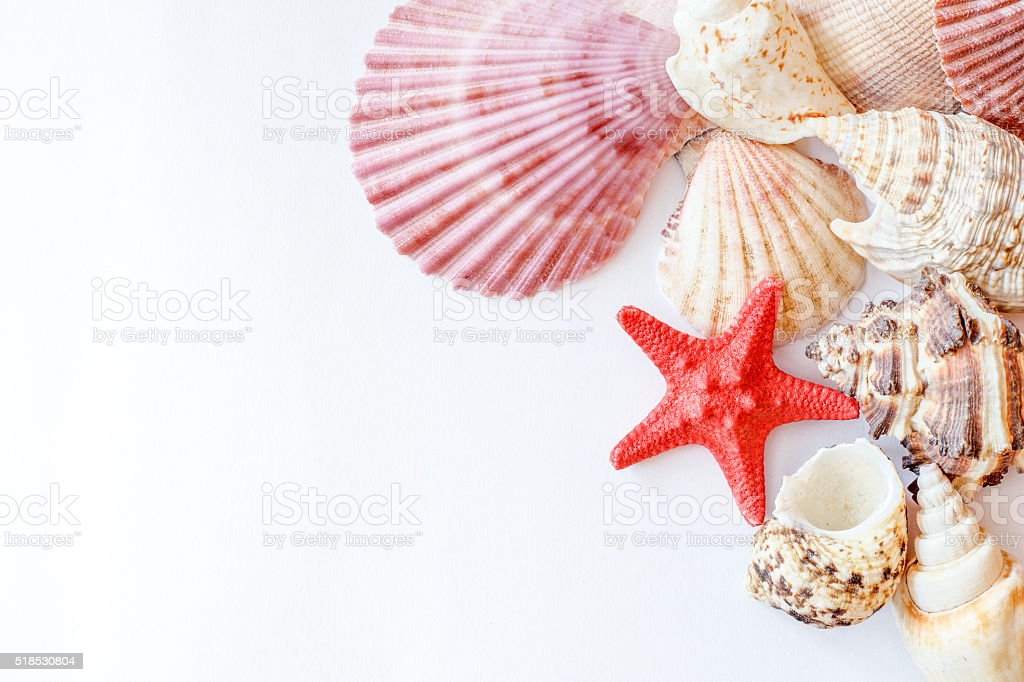 shells and starfish on white paper mix stock photo