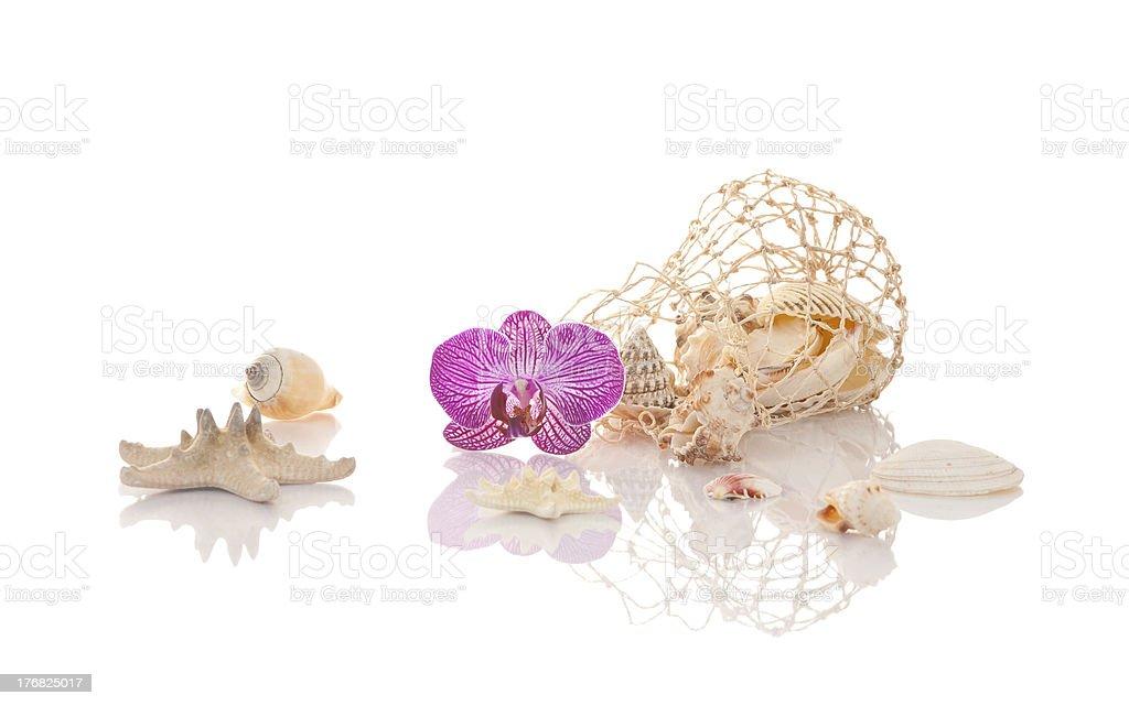 Shells and Starfish royalty-free stock photo