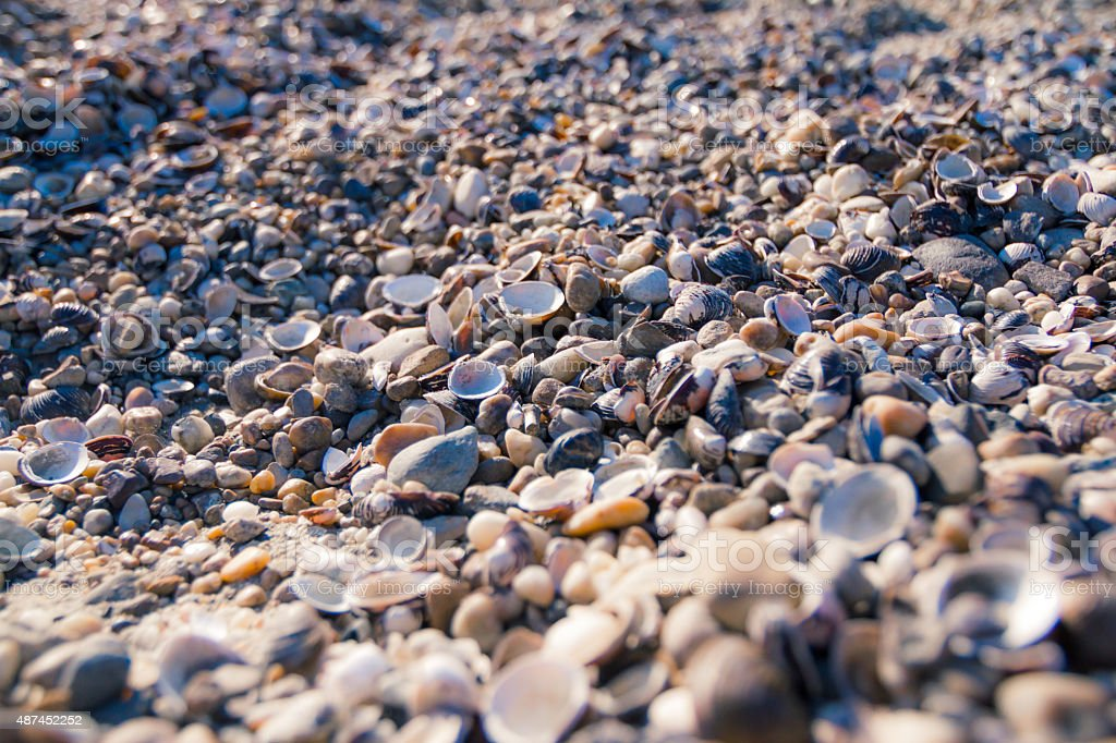 Shells background stock photo