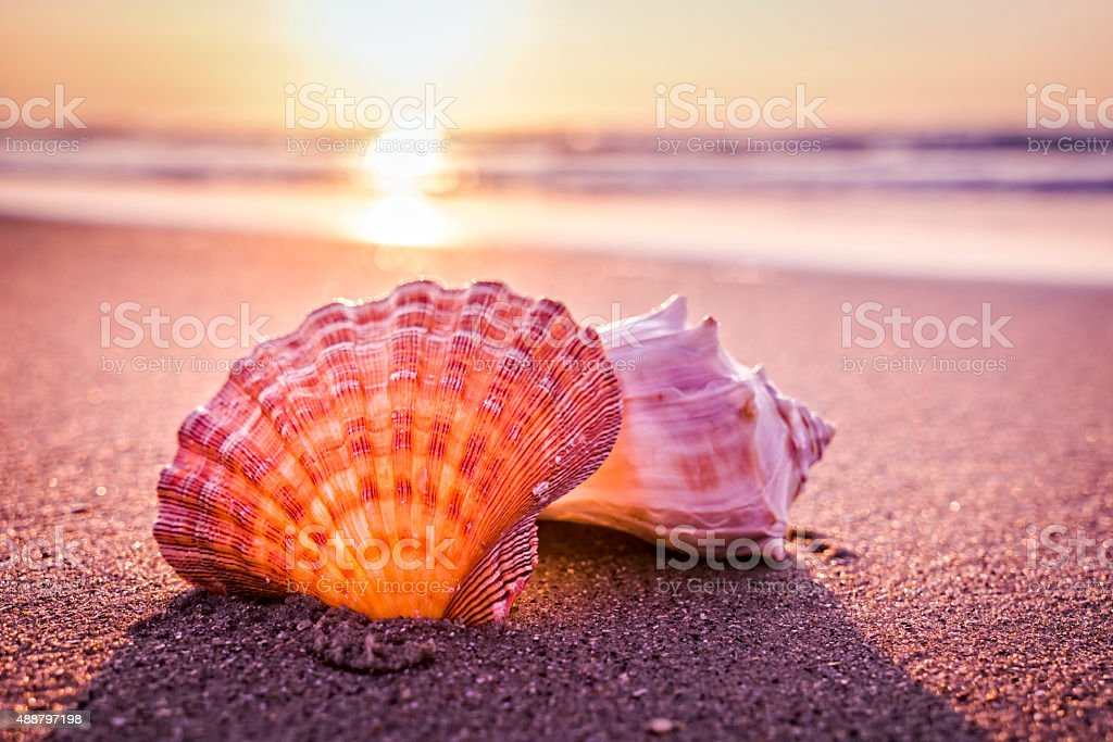 Shells, beach and morning sunrise stock photo