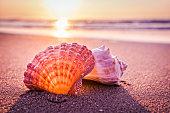 Shells, beach and morning sunrise