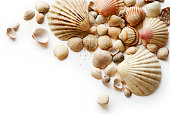 Shells clustered together on a white background
