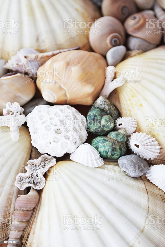 Shells collection in different tones background stock photo