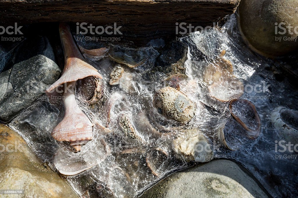 Shells encased in ice at Silver Sands Beach, Connecticut. stock photo