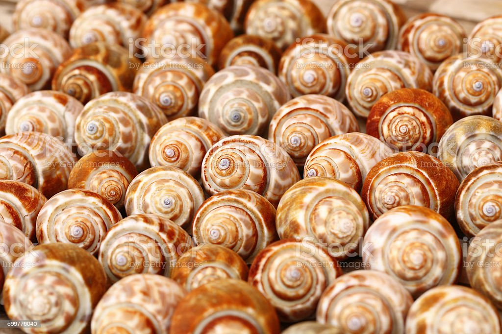 shells for background stock photo