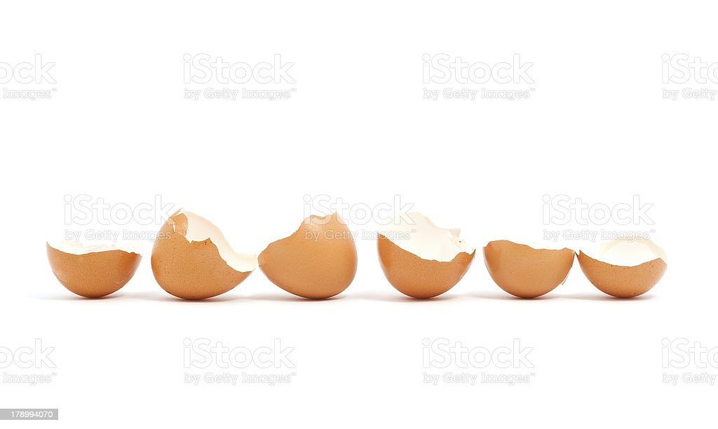 Shells in a row stock photo