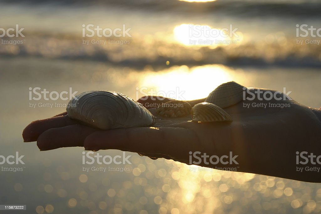 Shells in Hand royalty-free stock photo