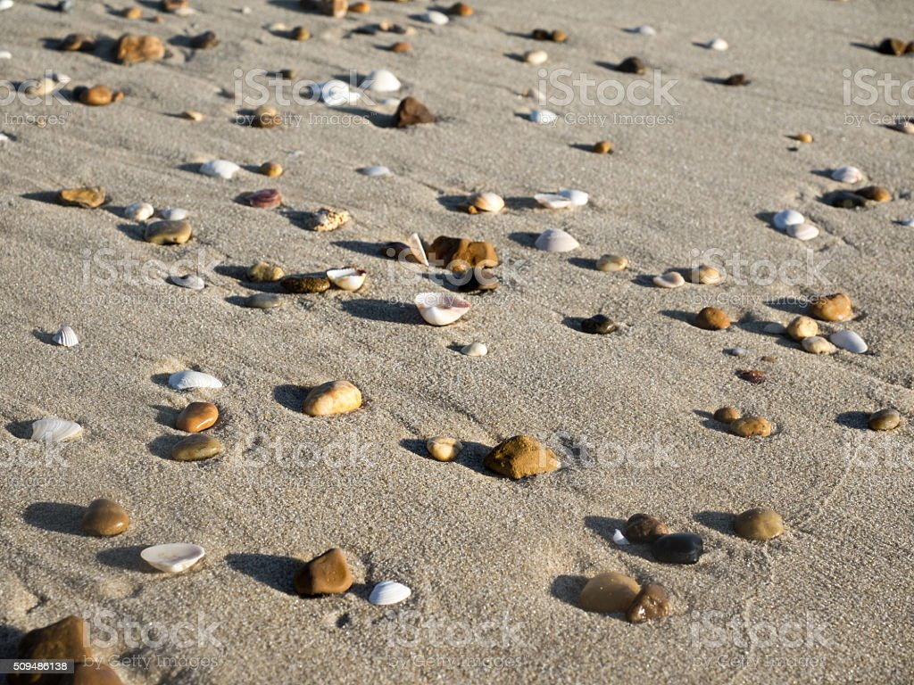 shells in the sand stock photo