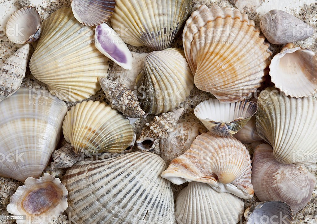 Shells Macro Texture royalty-free stock photo