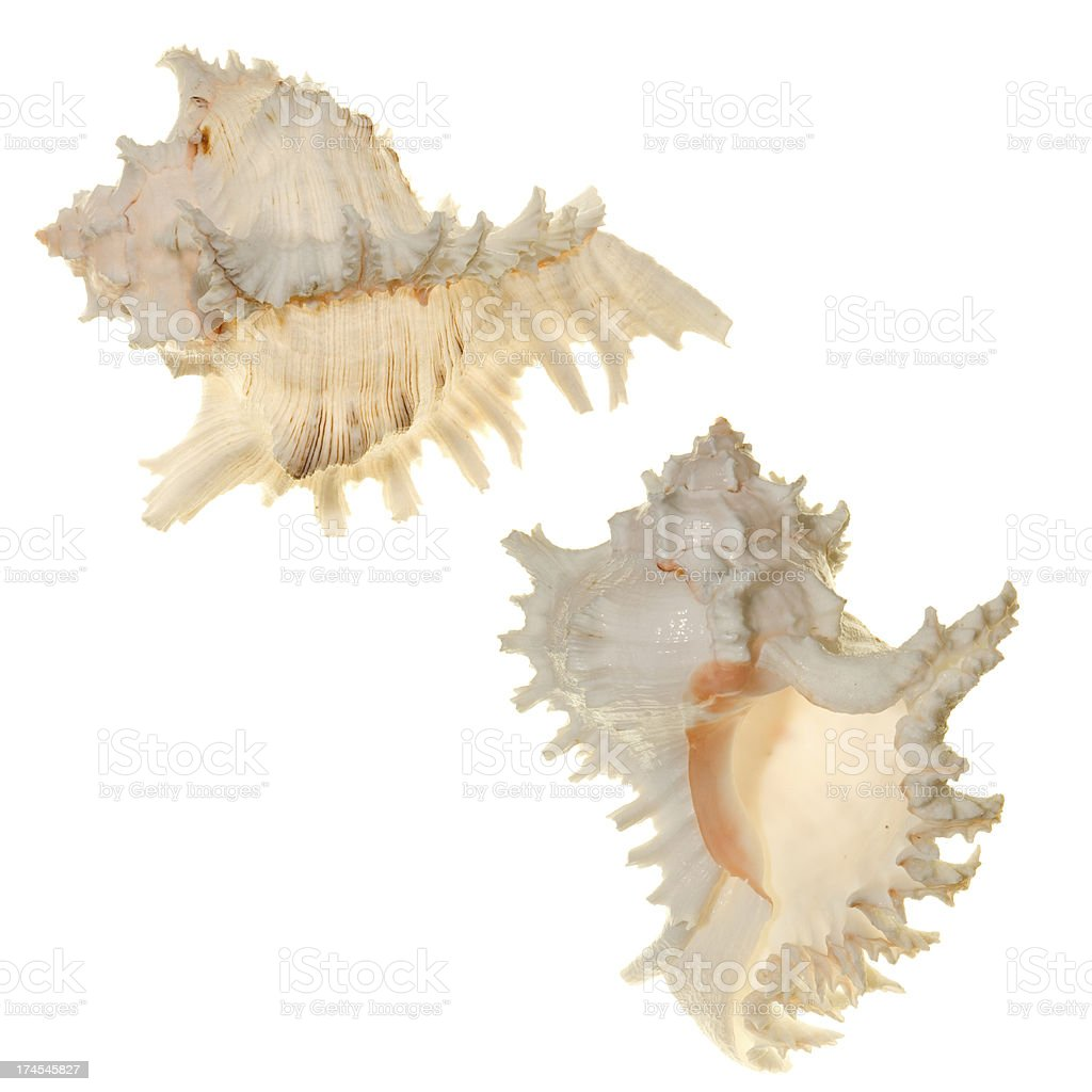 Shells of the world in detail stock photo