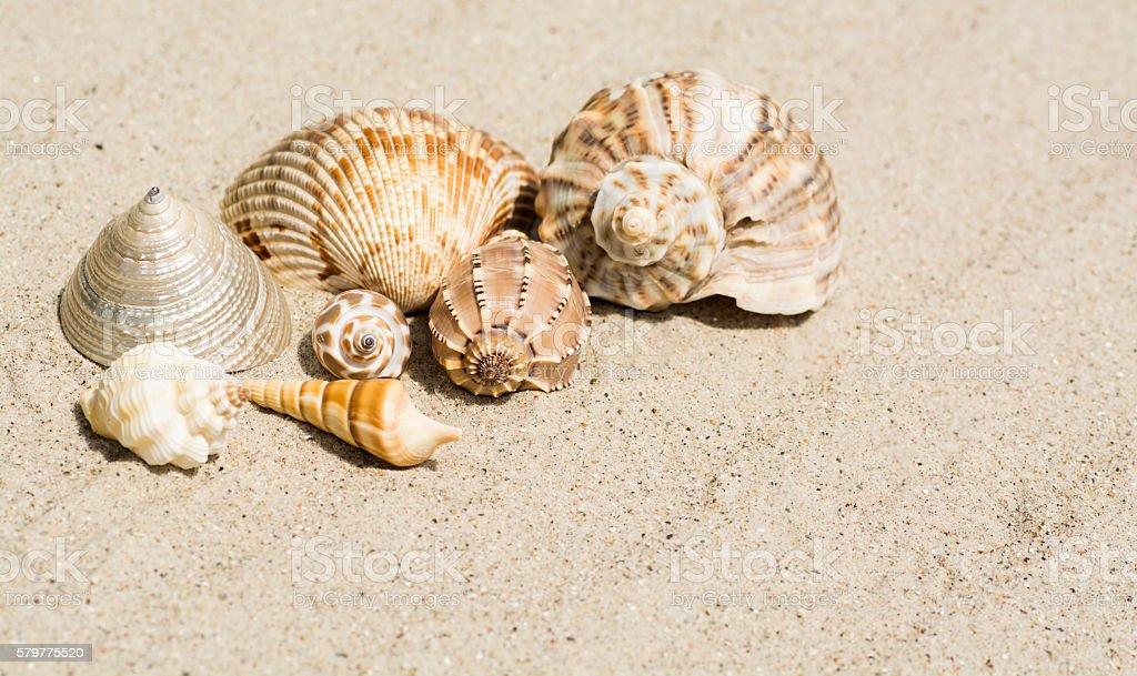 Shells  of the world on a beautiful wavy sand stock photo