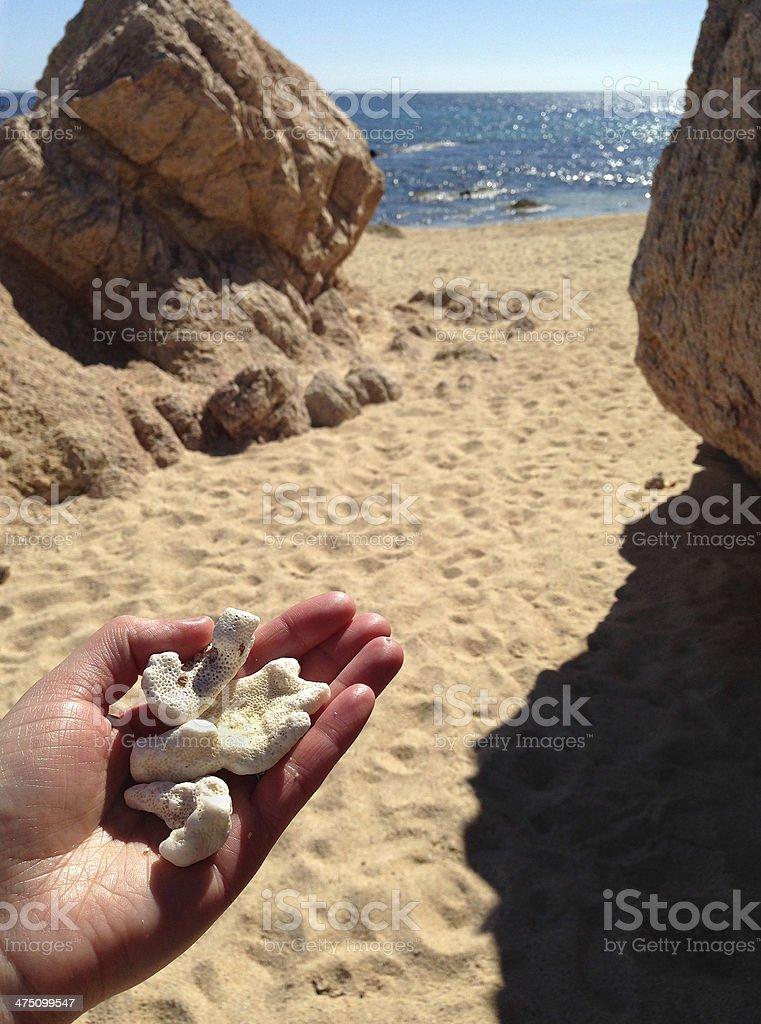 Shells on a Beach royalty-free stock photo