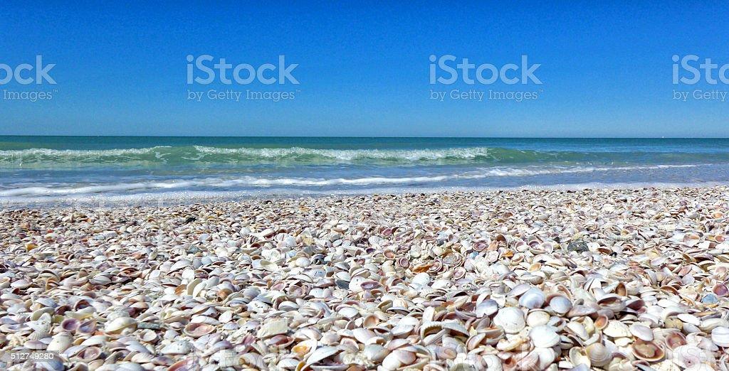 Shells on a beach with blue sky stock photo