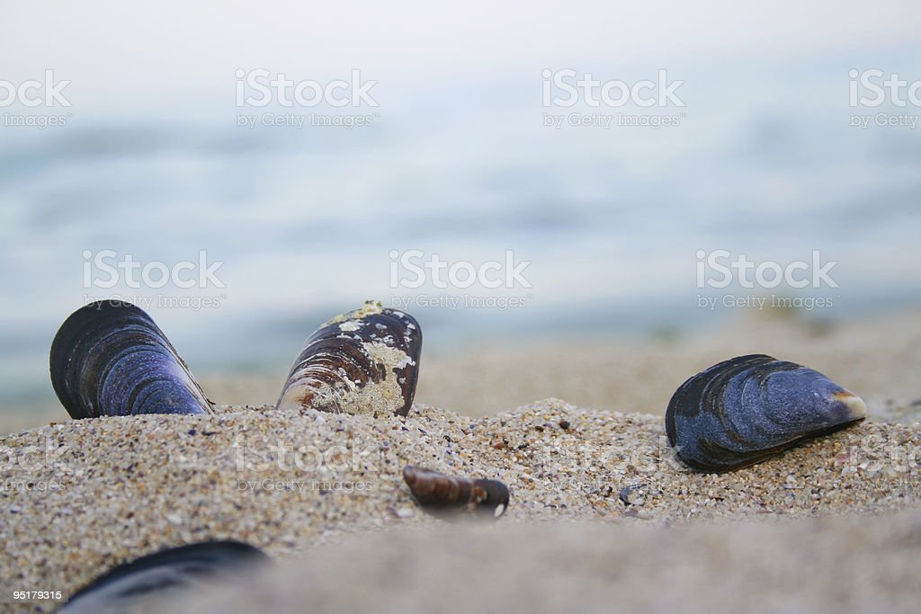 shells on a sand beach background royalty-free stock photo