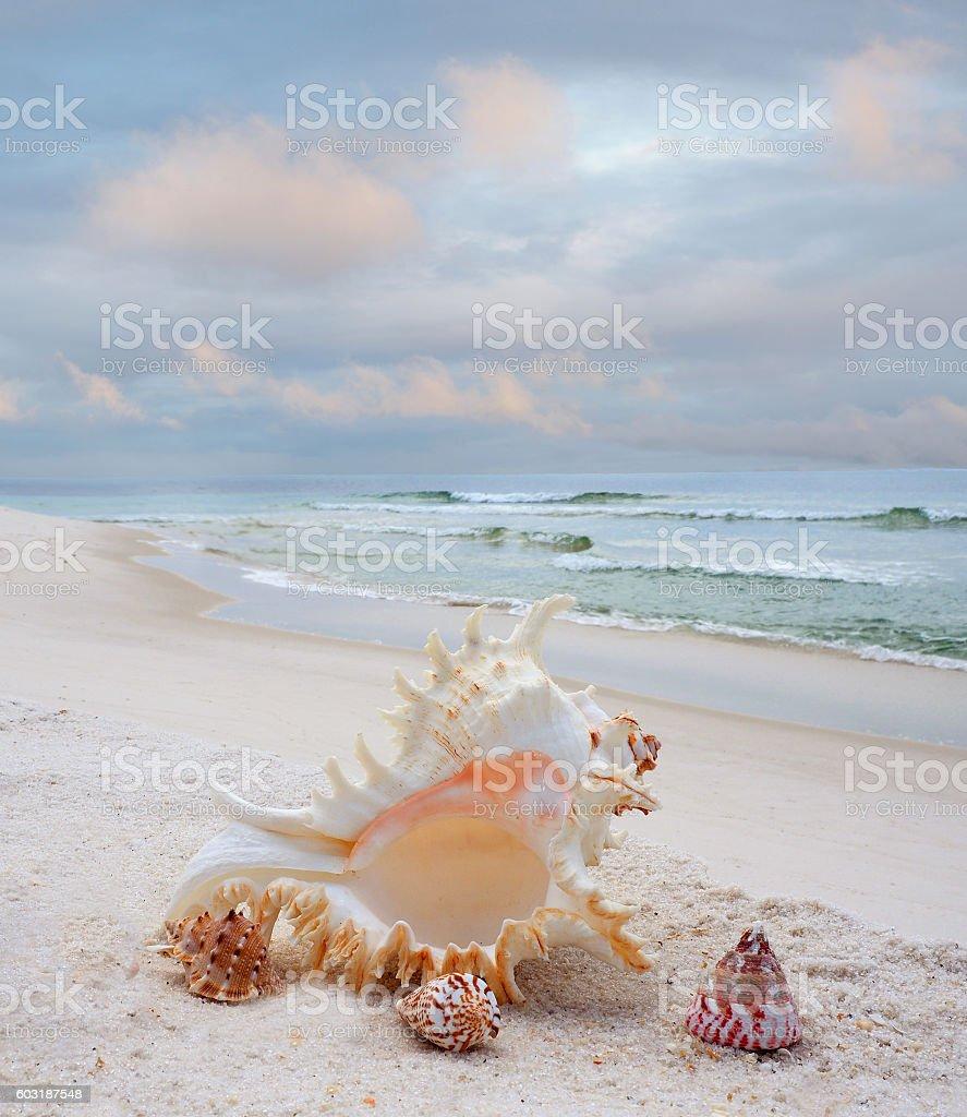 Shells on a White Sand Beach stock photo