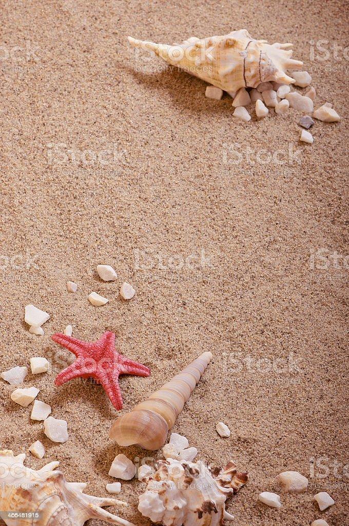 Shells on sand stock photo
