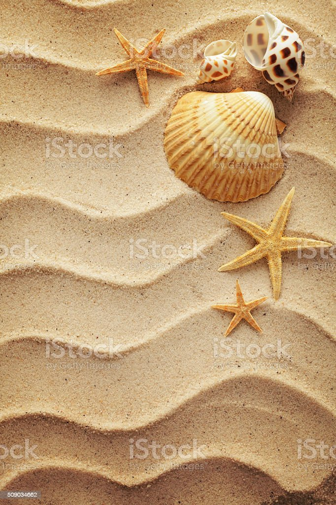 shells on sand stock photo