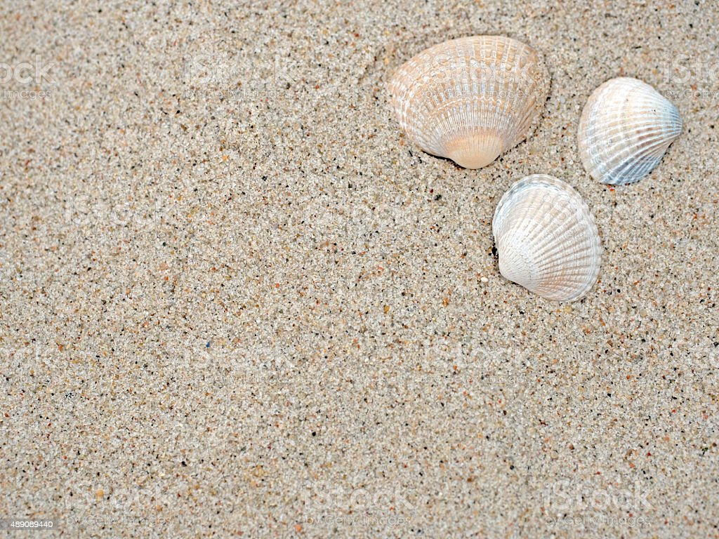 Shells on the beach stock photo