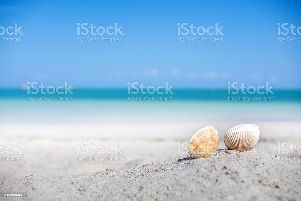 Shells on the sand beach stock photo