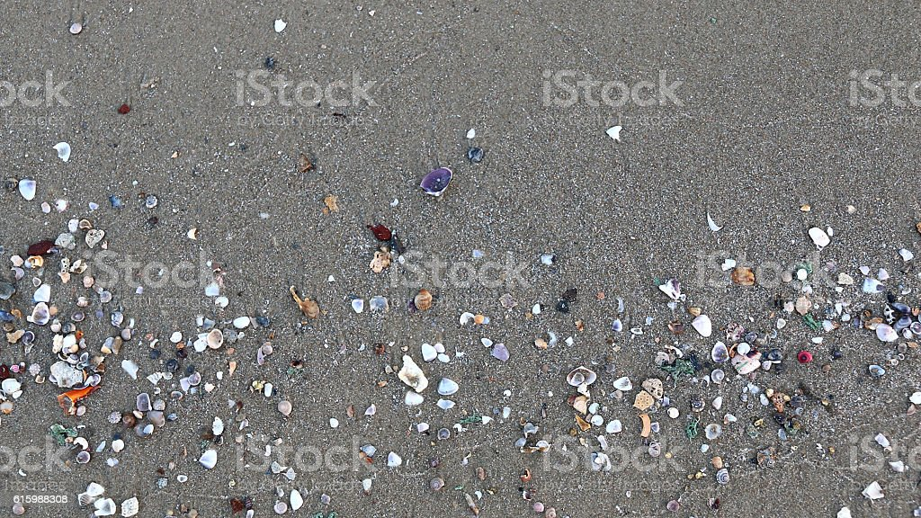 Shells on the sand stock photo
