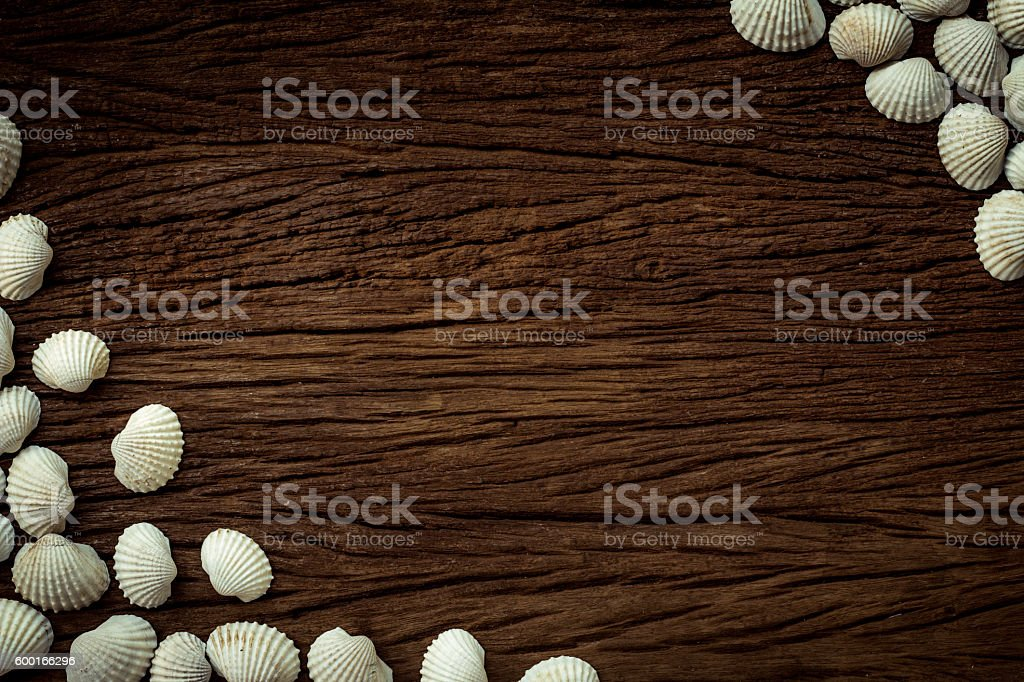 Shells on the wooden floor. stock photo