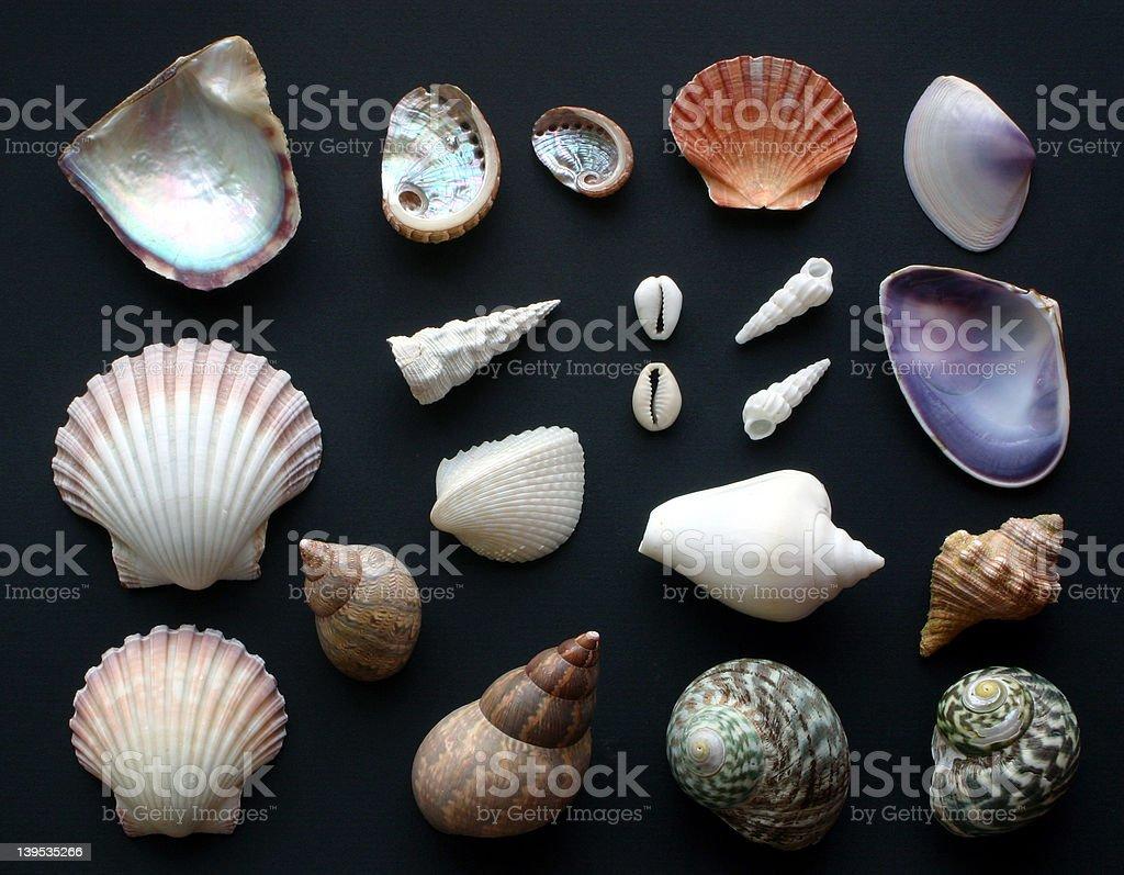 Shells royalty-free stock photo