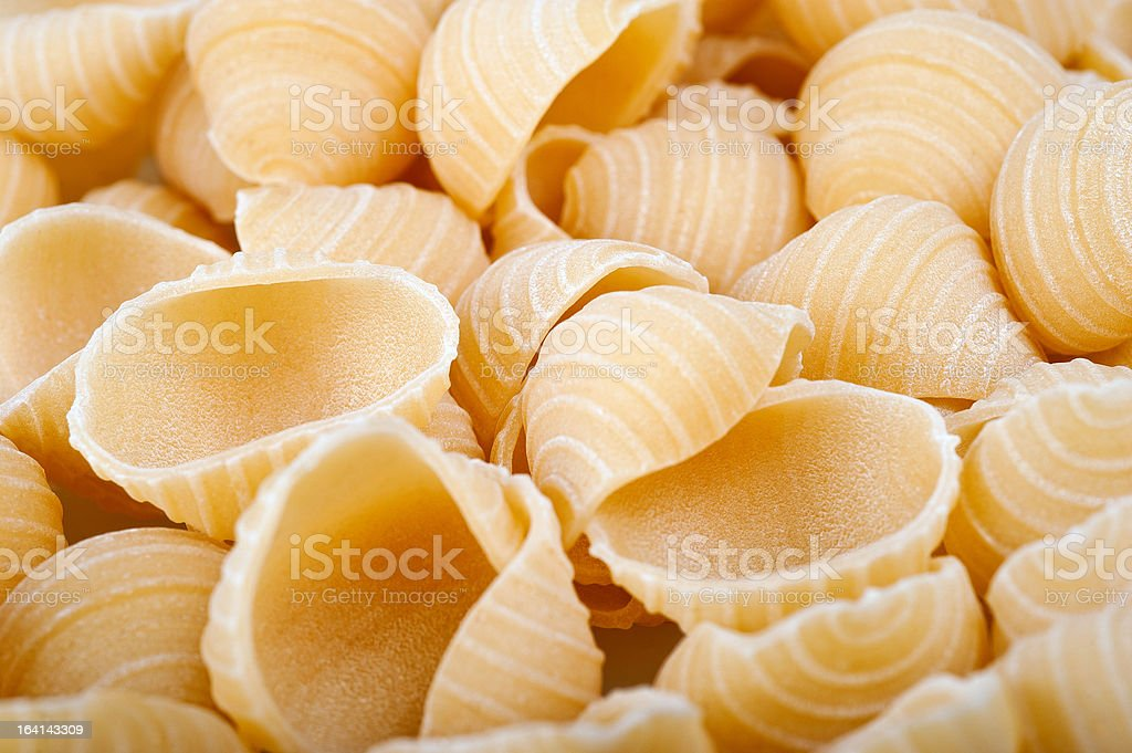 conchiglie royalty-free stock photo