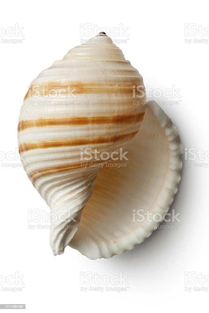 Shells: stock photo