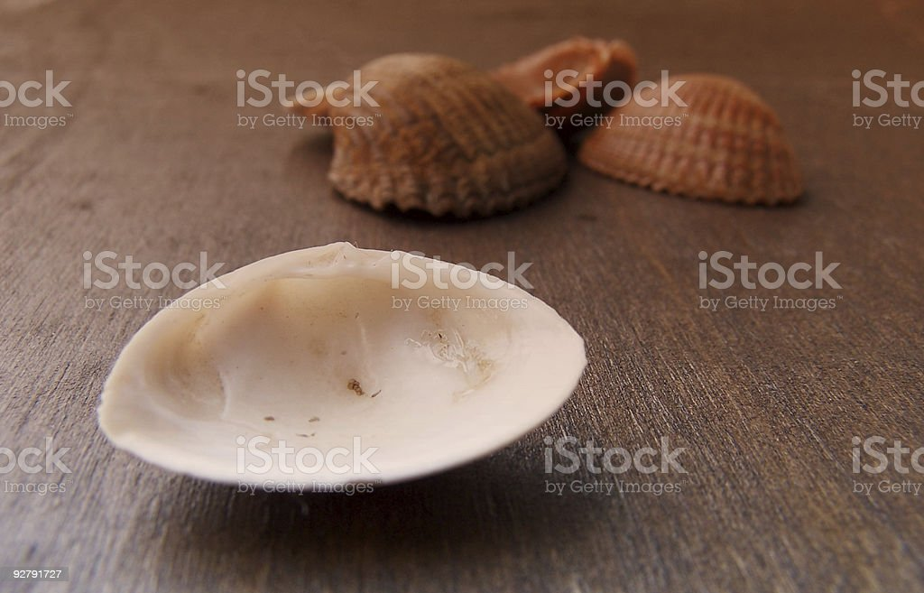 Shells royalty-free stock photo
