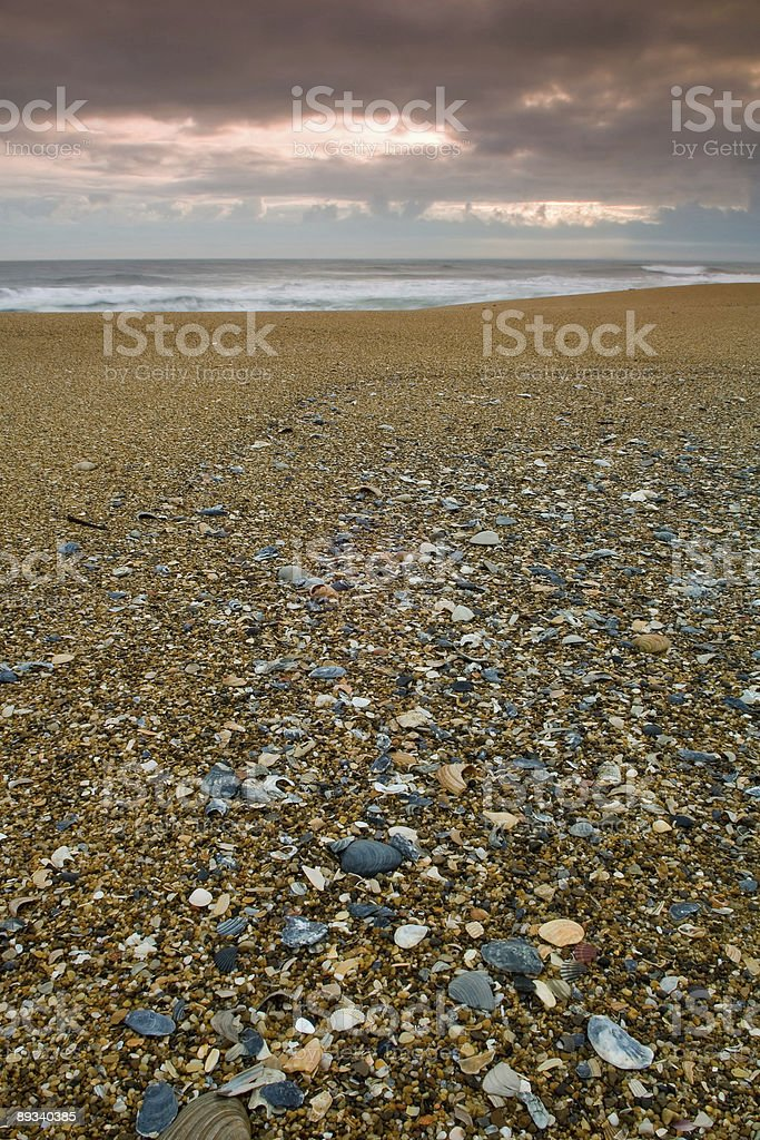 shells scattered on cape hatteras beach stock photo