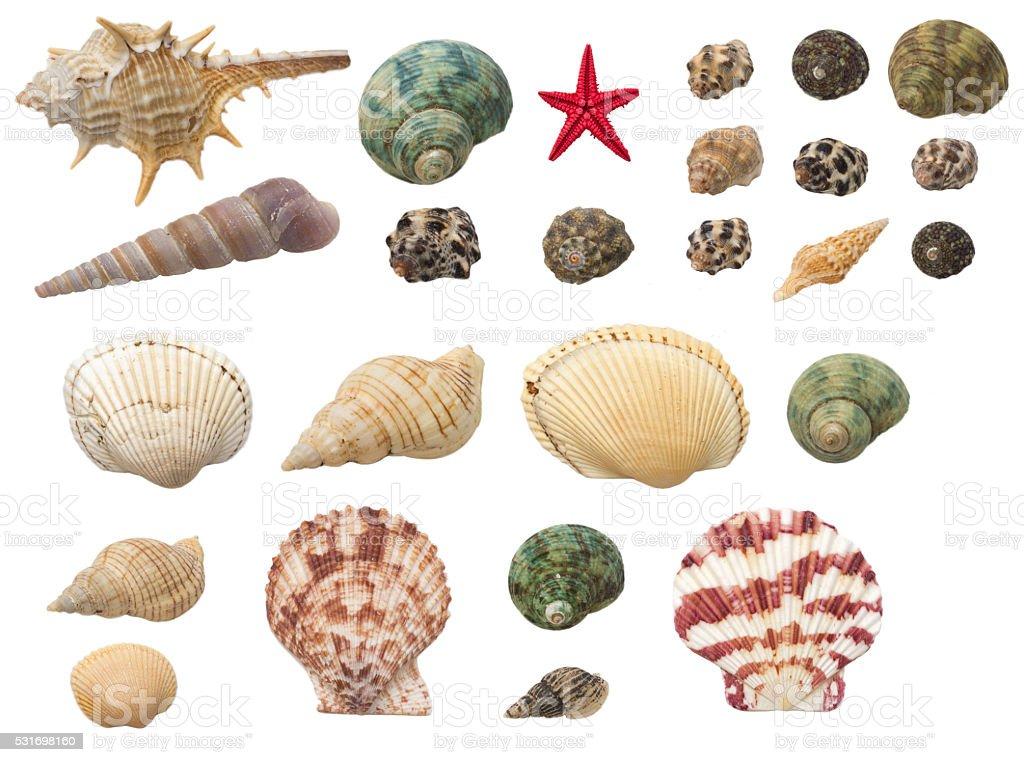 shells set isolated on white background stock photo